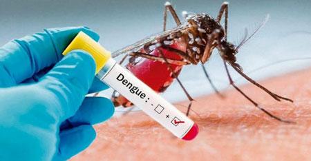 Infestação do mosquito da dengue em vários bairros preocupa em Umuarama