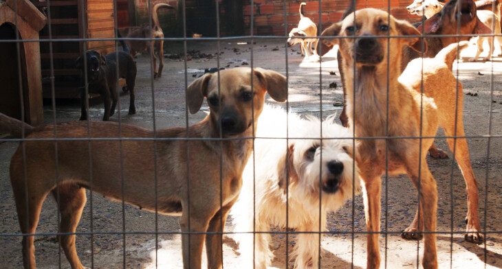 Serviço de castração de cães e gatos será oferecido em Umuarama